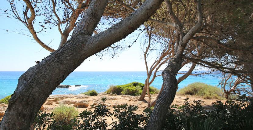 unique villas mallorca unique seafront villa for sale in Cala Ratjada garden