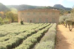 unique villas mallorca impressive manor estate for sale in Puigpunyent lavender fields