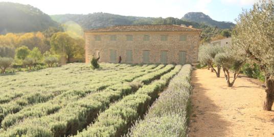 Impressive Manor Estate in Puigpunyent