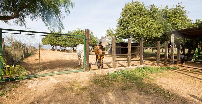 unique villas mallorca finca for sale in sencelles horse stables