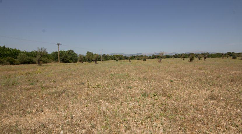 uniquevillasmallorca-plot--for-sale-in-Biniali-uvm275.2